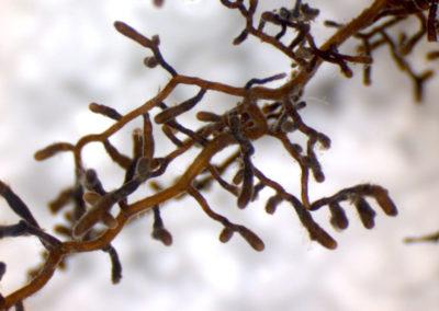 micorrize-blurb