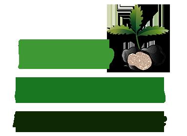 Logo_Vivai_Caterina_Trasparente